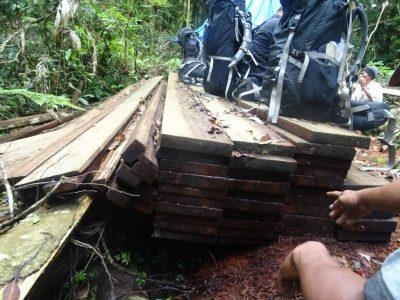 Seizing illegal wood in Sumatran Rainforest Leuser