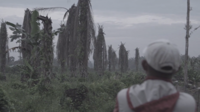 looking at ruined landscape - palm oil plantation in Sumatra