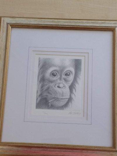 Paul Hickling limited edition orangutan print