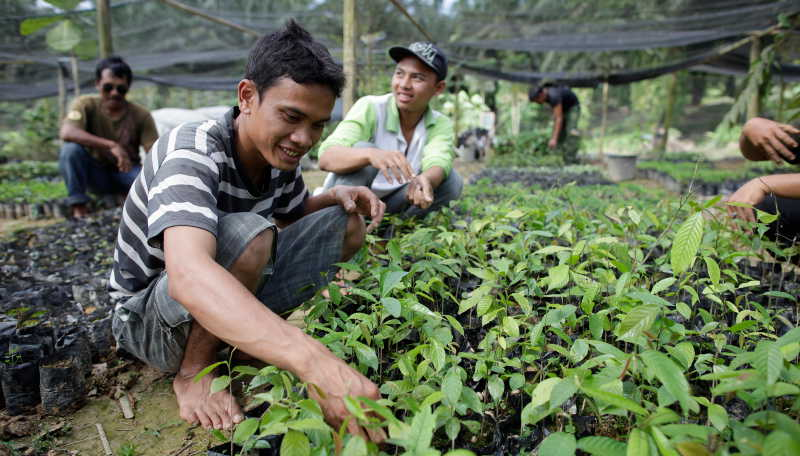 Tree nursery in Sumatra