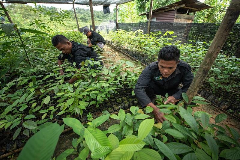 People working in a tree nursery in Sumatra