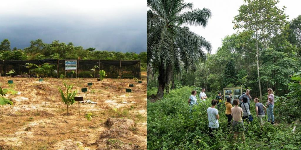 Two images side by side - one of barren ground and the other of a lush forest 10 years later