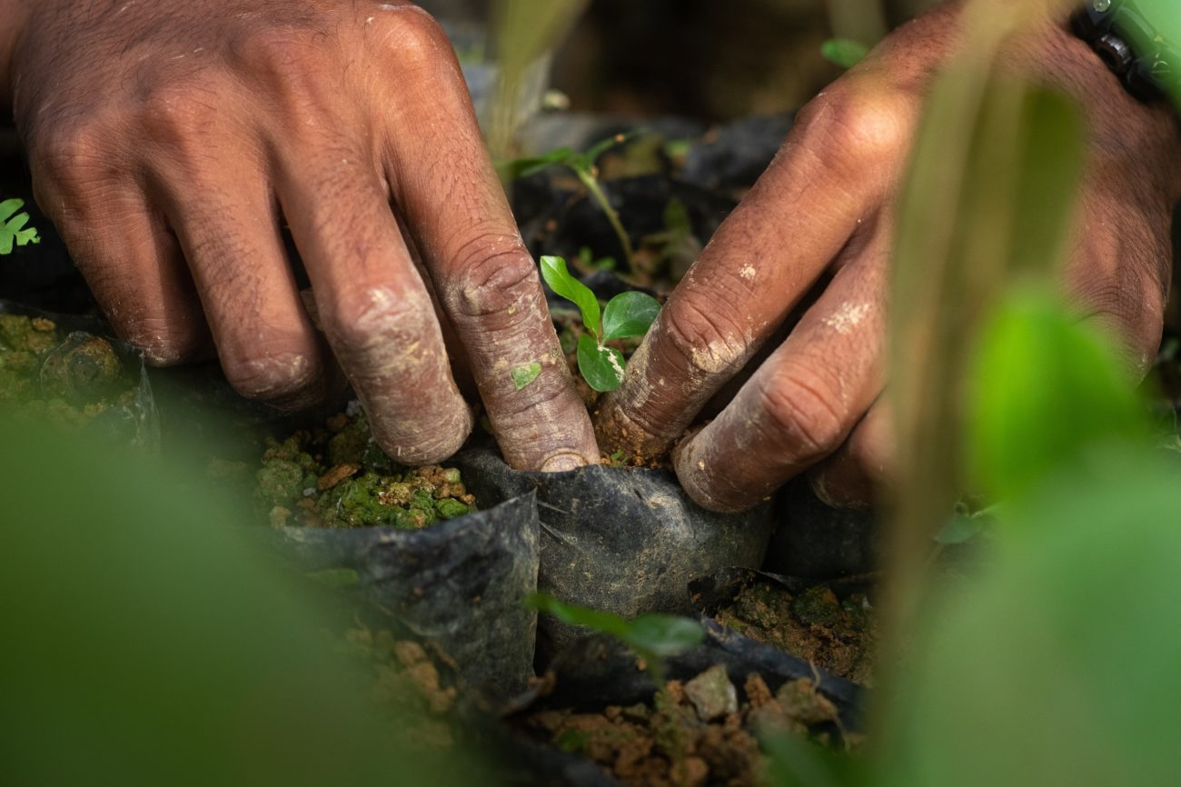 A close-up of hands planting a tree seedling